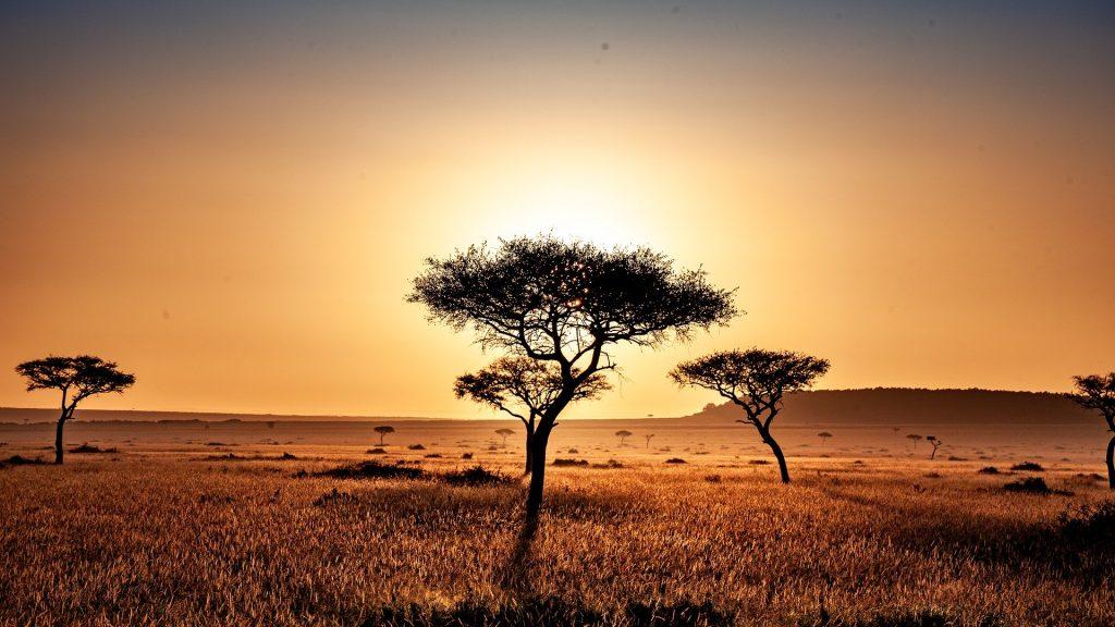 Sonnige Savanne in Kenia mit Bäumen