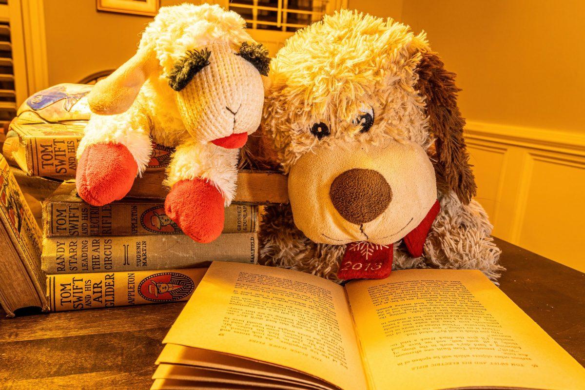 Zwei Kuscheltiere kucken in ein Buch